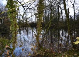 Un crocodile dans l'étang de Nieppe