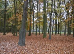 L'automne au parc du Château
